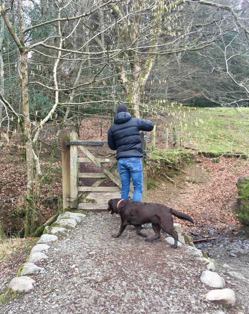 Lake District Dog Walk